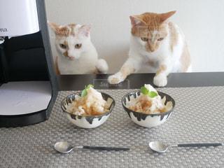 猫の写真・画像素材[1422325]