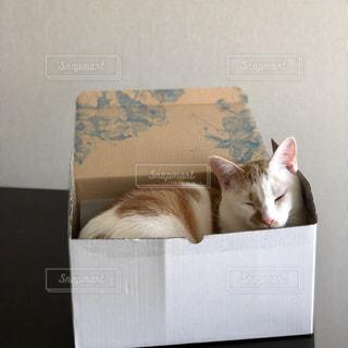 箱猫の写真・画像素材[1466105]