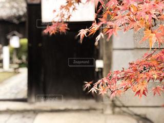 木の花の花瓶の写真・画像素材[1663996]