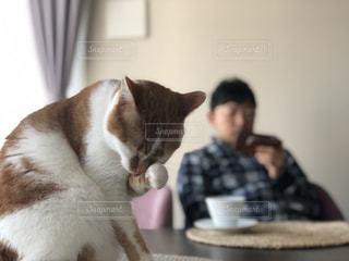 テーブルの上に座ってオレンジと白猫の写真・画像素材[1774724]