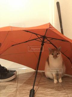 開いている傘の上に座っている猫の写真・画像素材[1774728]