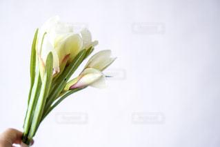 植物の花と花瓶の写真・画像素材[1877225]