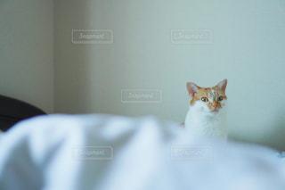 猫の写真・画像素材[1970203]
