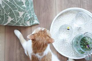 テーブルの上に座っている猫の写真・画像素材[3180816]