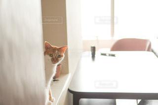 流しの隣に座っている猫の写真・画像素材[3326479]