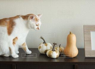 テーブルの上に座っている猫の写真・画像素材[3855889]