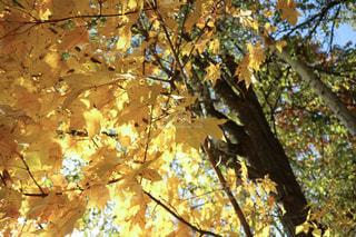 自然の写真・画像素材[240307]