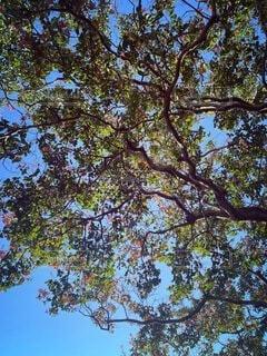 大きな木の写真・画像素材[4836356]
