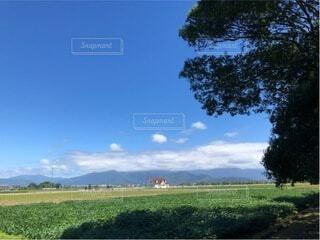背景に木々のある大きな緑の畑の写真・画像素材[4828580]