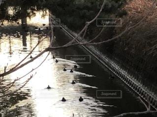 家路のひと時。水鳥たちは、何処に帰る。の写真・画像素材[4828645]