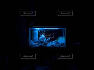 深夜の水槽/アクアリウムの写真・画像素材[4860749]