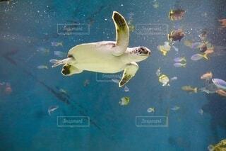 水の下で泳ぐカメと魚たちの写真・画像素材[4838632]