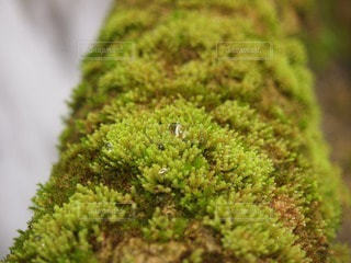 自然の写真・画像素材[41402]