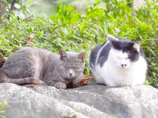 猫 - No.265332
