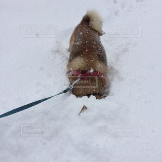 犬の写真・画像素材[310973]