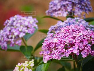 花の写真・画像素材[311010]