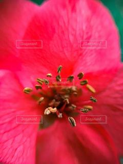花の写真・画像素材[333547]