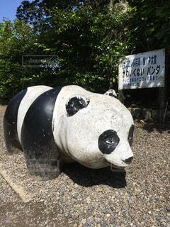かわいくないパンダの写真・画像素材[2777578]