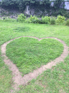 ハートの芝生の写真・画像素材[2777581]