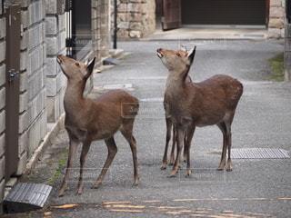 何かに気づいた鹿の写真・画像素材[2777590]