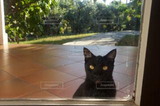 猫の写真・画像素材[378538]