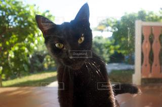 猫の写真・画像素材[378539]