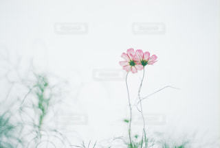 自然の写真・画像素材[221533]