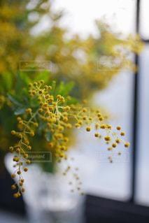 近くの花のアップ - No.1112710