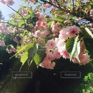 お花畑 - No.65683
