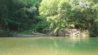 川のほとりの写真・画像素材[4874457]