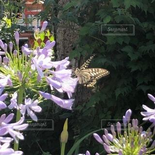 蝶と花の写真・画像素材[4839584]