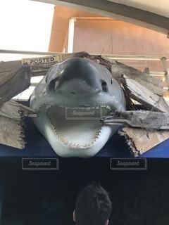 サメの剥製の写真・画像素材[4840946]