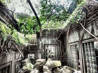 遺跡と草木の融合の写真・画像素材[4839462]