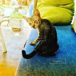 ソファの上の猫の写真・画像素材[4839539]