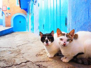 白い建物の上に座っている猫の写真・画像素材[1002446]
