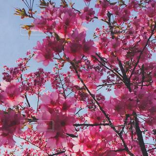花の写真・画像素材[333961]