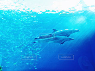 イルカの写真・画像素材[333965]