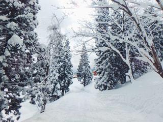 雪 - No.342938