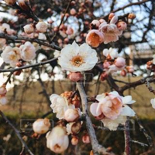 春が来るの写真・画像素材[1027272]