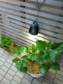 ベランダの植物の写真・画像素材[4845951]
