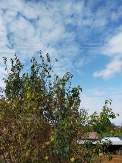 窓からの景色の写真・画像素材[4854503]