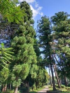 森の中の大きな木の写真・画像素材[4862236]