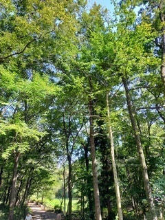 森の中の木の写真・画像素材[4866810]