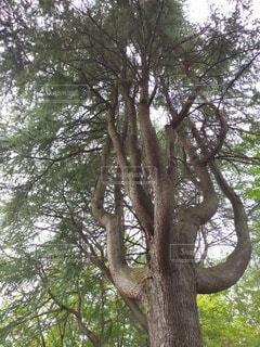 大きな木の写真・画像素材[4872981]