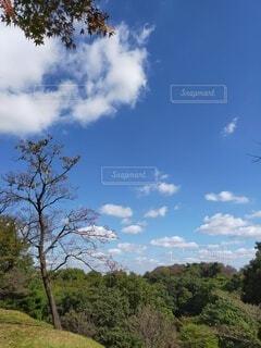 畑の大きな木の写真・画像素材[4927428]