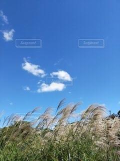 木の隣の丘の中腹の近くの写真・画像素材[4939056]