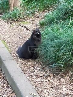 草の中に横たわっているクマの写真・画像素材[4946870]