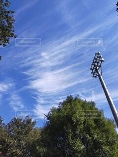 木の上の空を飛んでいる人の写真・画像素材[4946876]