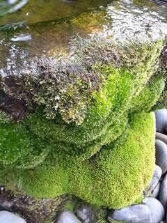 綺麗な水と緑の苔の写真・画像素材[4841163]