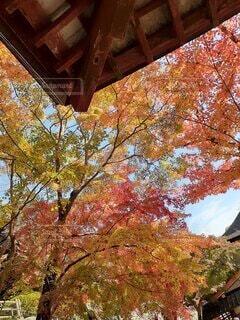 木のクローズアップの写真・画像素材[4841192]